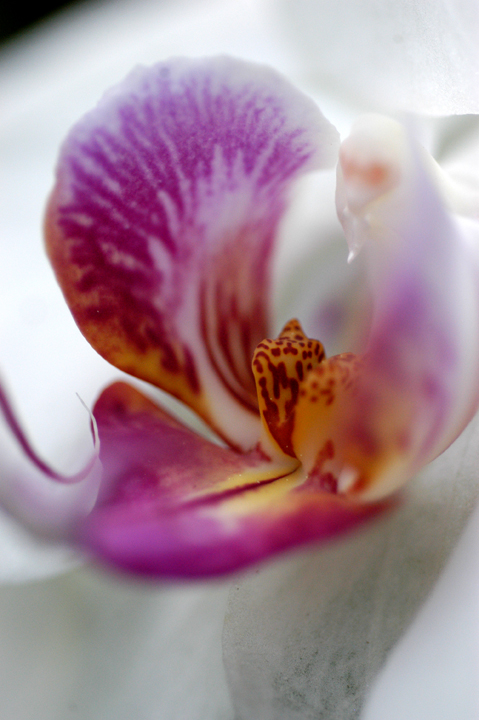 orchid_lo